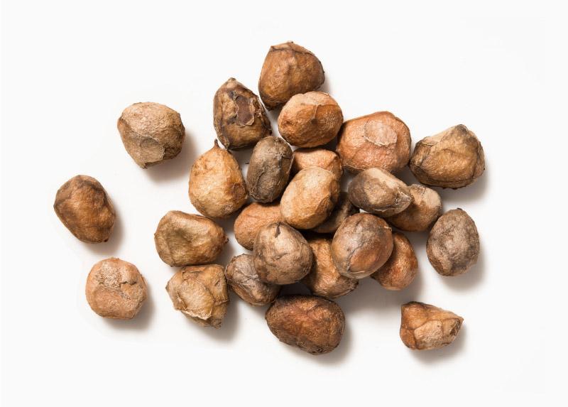 Marula Seeds